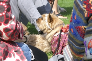 dog costume show and shine field of dreams