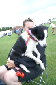 dizzi dog collie cuddle vicki field of dreams